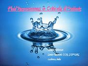 Fluid Responsiveness in Critically ill Patients