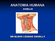 anatomia_cuello PPT