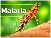 Malaria: Pathophysiology, Medical and Nursing Management