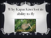 Why Kapai Kiwi Lost his ability to fly.