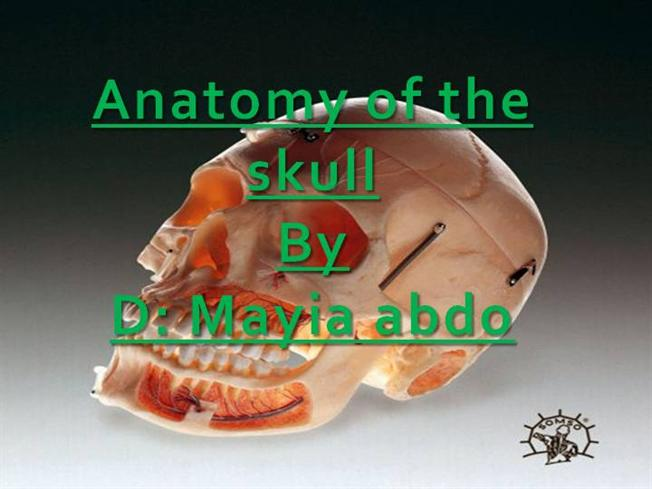 Anatomy Of The Skull Authorstream