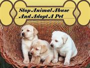 stop animal abuse and adopt a pet