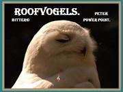 roofvogels.