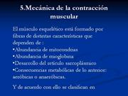 CONTRACCION MUSCULAR II