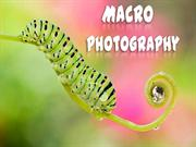 Macro-Photography (Part9)