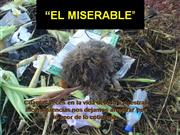 El Miserable