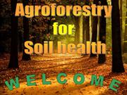AGROFORESTRY for SOIL HEALTH (Presented at IFGTB on 22-2-13)