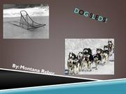 Dog sleds by Montana Reber