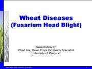 LEE Wheat 5 Diseases