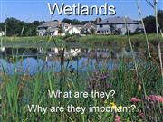 Wetlands final presentation