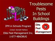 Troublesome Pests In School