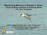 Item 2 Mercury in Terns
