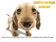 ich wurde zum Hund