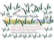 Our not so favorite weeds