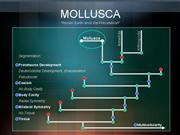 MOLLUSCA Power Point