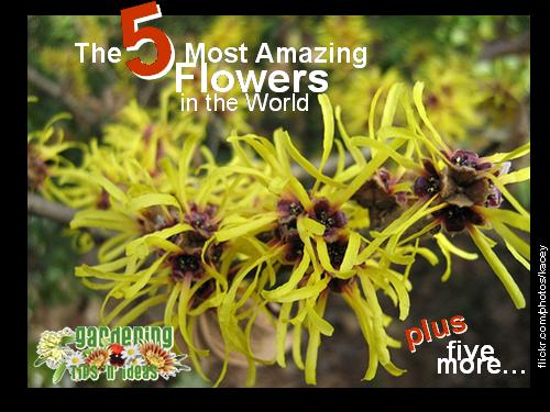 10 Most Amazing Flowers in the world