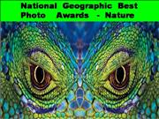 national geographic best photo awards nature