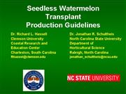 Seedless watermelon transplant quide