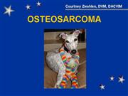 Osteosarcoma greyhound