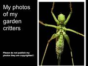 My photos of garden critters
