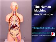 The Human Body ... inside us