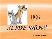 Dog Slideshow