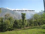 Visit Palampur this summer