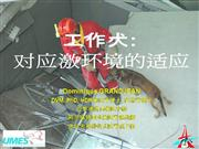 Preparation of Search and Rescue Dogs chinese