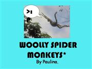 The Woolly Spider Monkeys`