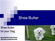 Shea Butter for Your Dog