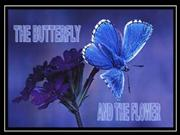 The Butterfly and the Flower...