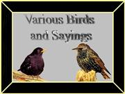 Birds and Saying...