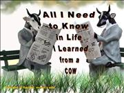 All I need to know in life I learned from a cow