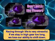 Don't miss the flowers