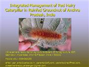 Integrated Management of Red Hairy Caterpillar
